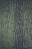 Struttura 1 della corteccia Fotografia Stock
