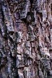 Struttura della corteccia Fotografia Stock