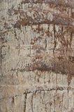 Struttura della corteccia della noce di cocco Immagini Stock