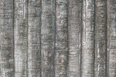 Struttura della corteccia della palma o della noce di cocco per fondo Immagine Stock Libera da Diritti