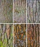Struttura della corteccia di albero Fotografie Stock Libere da Diritti