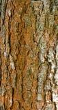 Struttura della corteccia di albero immagini stock