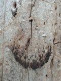 Struttura della corteccia di albero, carta da parati del fondo della creazione della natura immagine stock