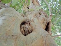 Struttura della corteccia di albero, carta da parati del fondo della creazione della natura fotografie stock