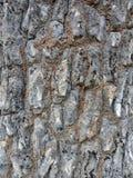 Struttura della corteccia di albero con fango, carta da parati del fondo della creazione della natura immagini stock