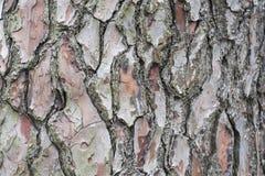 Struttura della corteccia di albero con il modello interessante Fotografie Stock