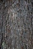 Struttura della corteccia di albero con muschio Fotografia Stock