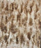 Struttura della corteccia di albero dell'acquerello Immagini Stock Libere da Diritti