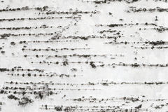 Struttura della corteccia di albero della betulla bianca Fotografia Stock