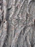 Struttura della corteccia di albero di autunno Fotografie Stock Libere da Diritti