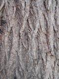 Struttura della corteccia di albero di autunno Immagini Stock