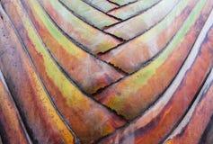 Struttura della corteccia di albero Fondo della palma Corteccia di una palma Fotografie Stock