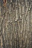 Struttura della corteccia di albero di marrone scuro fotografia stock libera da diritti