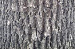 Struttura della corteccia di albero tronco del fondo dell'albero di abete Fotografie Stock Libere da Diritti
