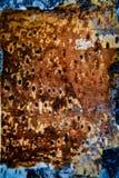 Struttura della corteccia di betulla Fotografia Stock