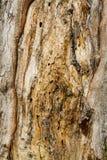 Struttura della corteccia di Brown Fotografia Stock