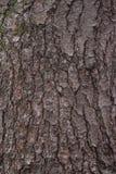 Struttura della corteccia di pino Immagini Stock Libere da Diritti