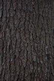 Struttura della corteccia di pino Fotografie Stock Libere da Diritti