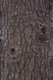 Struttura della corteccia di pino Fotografia Stock Libera da Diritti