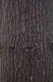 Struttura della corteccia di pino Fotografia Stock
