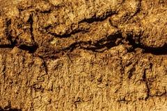 Struttura della corteccia di un albero Immagini Stock