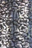 Struttura della corteccia di un albero Immagine Stock