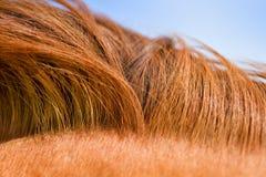 Struttura della criniera del cavallo Fotografie Stock Libere da Diritti
