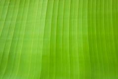 Struttura della foglia della banana immagini stock libere da diritti