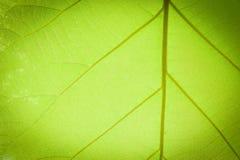 Struttura della foglia, fondo della foglia per progettazione fotografie stock