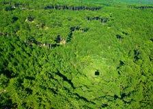 Struttura della foresta, parti superiori dell'albero Immagini Stock Libere da Diritti