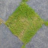 Struttura della ghiaia e dell'erba Fotografia Stock Libera da Diritti
