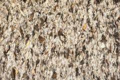 Struttura della lana delle pecore Immagini Stock Libere da Diritti