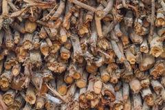 Struttura della legna da ardere Immagini Stock