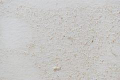 Struttura della muffa sul fondo attenuato bianco della parete fotografia stock