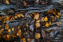 Struttura della natura di autunno Fotografia Stock Libera da Diritti