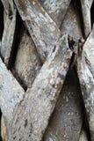 Struttura della palma Fotografia Stock