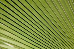 Struttura della palma Fotografia Stock Libera da Diritti