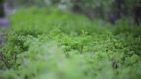 Struttura della parete delle foglie verdi della natura della pianta tropicale della foresta, su fondo nero Verdi succosi della mo archivi video