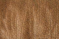 Struttura della pelle Fotografia Stock Libera da Diritti