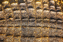 Struttura della pelle del coccodrillo Fotografia Stock Libera da Diritti