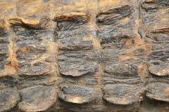 Struttura della pelle del coccodrillo Fotografie Stock Libere da Diritti