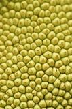 Struttura della pelle del Jackfruit Fotografie Stock Libere da Diritti