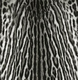 Struttura della pelliccia del Ocelot Fotografia Stock