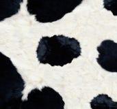 Struttura della pelle della mucca Immagine Stock