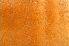 Struttura della pelle della zucca della cera Immagini Stock Libere da Diritti