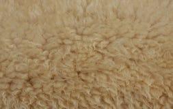Struttura della pelle di pecora immagine stock