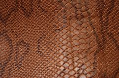 Struttura della pelle di serpente Fotografie Stock Libere da Diritti
