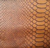 Struttura della pelle di serpente di Brown Fotografie Stock Libere da Diritti
