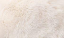 Struttura della pelliccia Immagine Stock