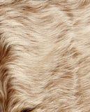 Struttura della pelliccia immagini stock libere da diritti